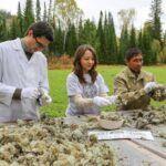 Nabiranje divjih rastlin – Natura Siberica